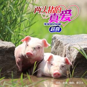 两头猪的真爱(热度:140)由花开富贵翻唱,原唱歌手赵真