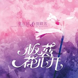 板蓝花儿开(Live)(热度:91)由梅翻唱,原唱歌手张正扬/贺群芳