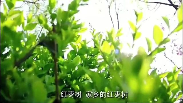 红枣树原唱是任妙音,由晨曦翻唱(播放:85)