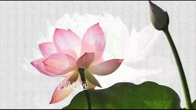 来生愿做一朵莲(热度:79)由【湘E】春晓翻唱,原唱歌手马建军