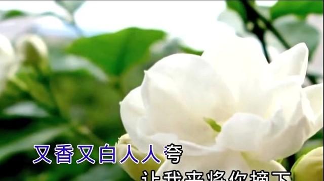 茉莉花(热度:63)由腊腊翻唱,原唱歌手宋祖英