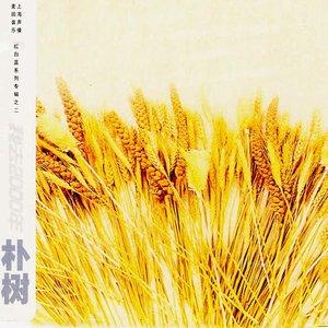 白桦林(Live)(热度:568)由大小姐(早8晚8)翻唱,原唱歌手朴树
